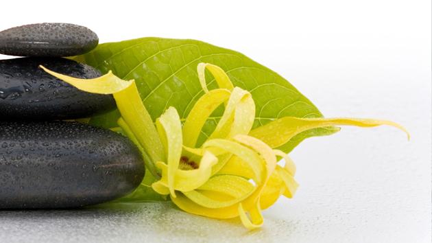 aceite esencial Ylan Ylang